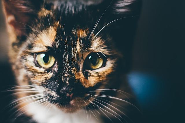 Enterite gatto: cause, sintomi e soluzioni per curarla