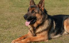 Proteggere le zampe del cane dal caldo: come fare?