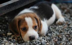 Cuccioli abbandonati, come prendersi cura di loro?