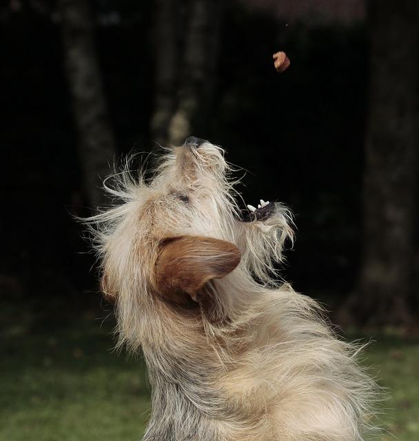 Crocchette per cani Hill's: qualità e rispetto