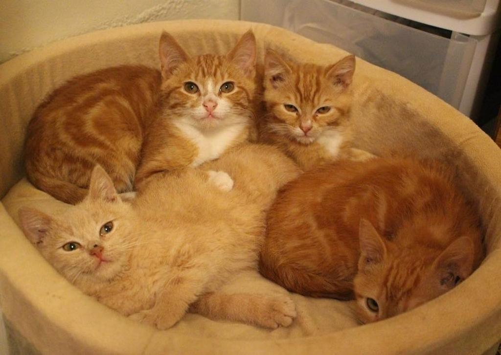 Gattini trovano papà adottivo: la storia del felino Leo