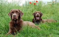Colite nel cane: sintomi e trattamento della patologia