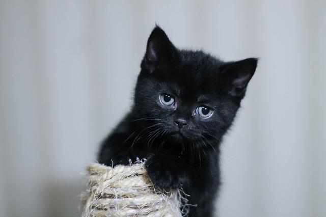 Gatto ha bisogno di compagnia: come capirlo?