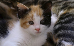 Vomiting in Cats: what you need to know