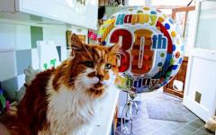 Gatto più vecchio del mondo: i 30 anni di Rubble