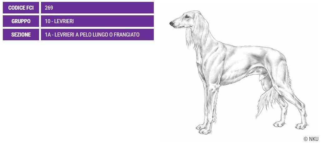 Saluki, carattere, caratteristiche e prezzo - Razze cani