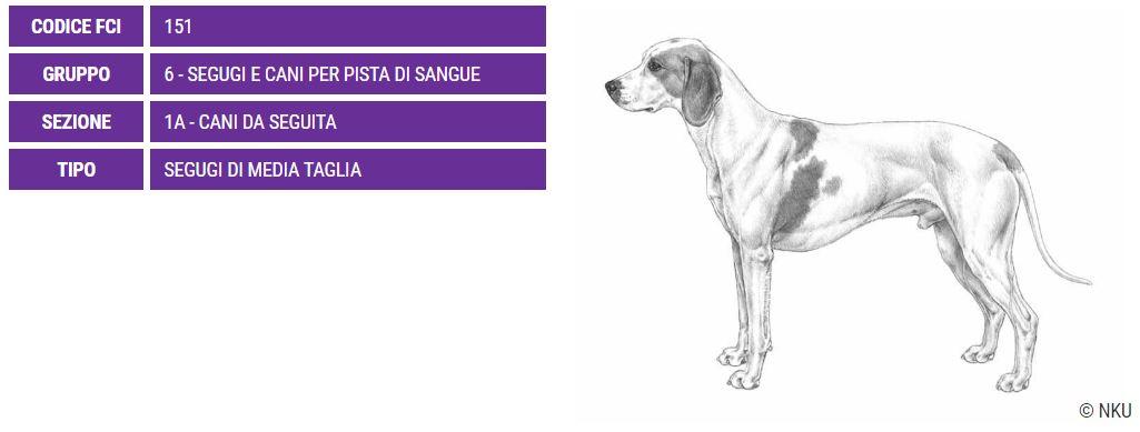 Segugio dell'Istria, carattere e prezzo - Razze cani