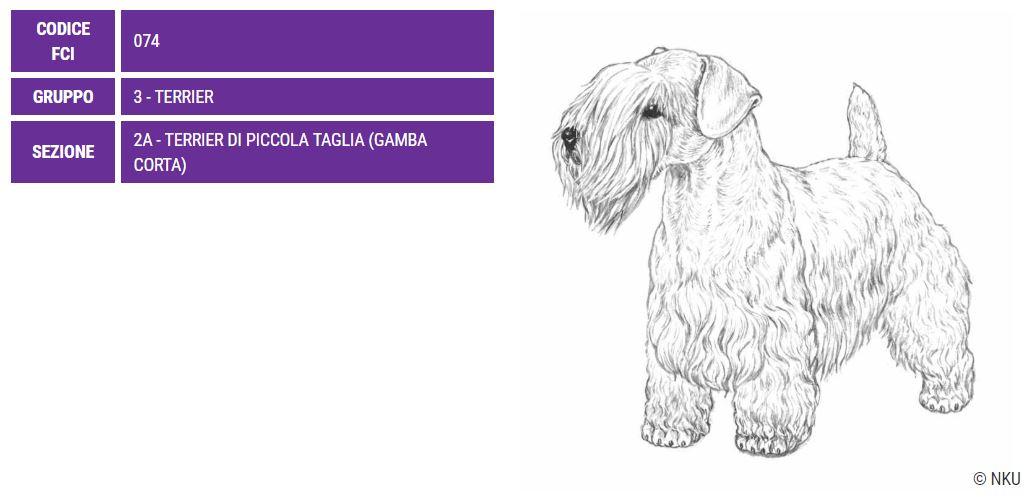 Sealyham Terrier, carattere e prezzo - Razze cani