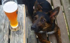 Birra e vino per cani e gatti: una nuova mania?