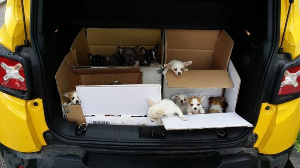 Cane Caboto salva i suoi simili, fermando traffico di cuccioli