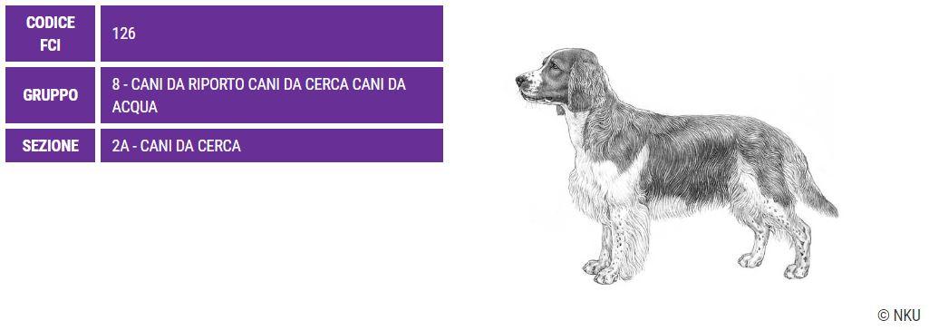Welsh Springer Spaniel, carattere e prezzo - Razze cani