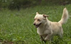 Zecchino cerca casa, appello per adozione