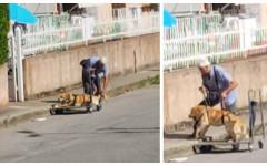 Cane disabile a passeggio: la storia commovente di Dylan