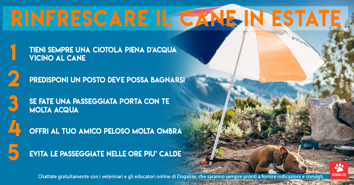 Infografica: come rinfrescare cane in estate