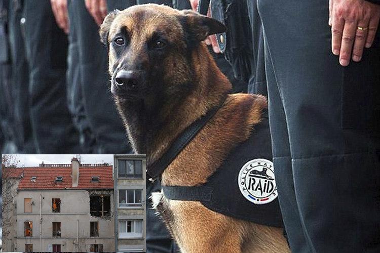 Diesel perro: una heroína canina que recordaremos