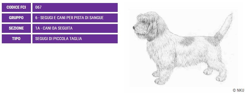 Petit Basset Griffon Vendeen, carattere e prezzo - Razze cani