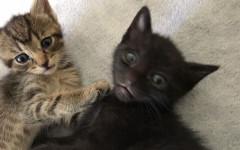 Mamme e gattini cercano casa: appello per adozione