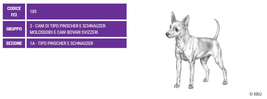 Zwergpinscher, carattere e prezzo - Razze cani