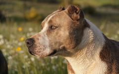 Tagliate orecchie cane, proprietario verso il processo