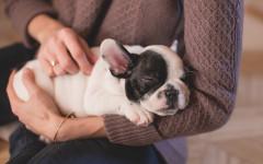 Adottare un cucciolo di cane: come si fa e consigli