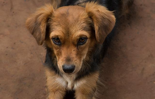 Investe un cane e lo uccide: uomo condannato a 5 mesi