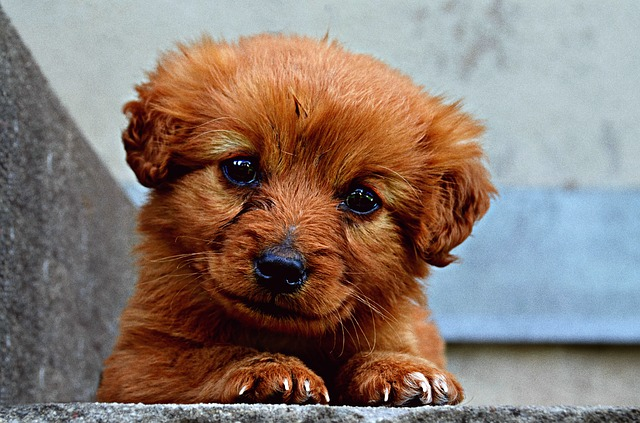 Enterofilus cane: utile in caso di diarrea e non solo