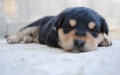 Cuantas horas duerme un perro: buen sueño para todos