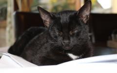 Tos en gatos: prevención y tratamiento