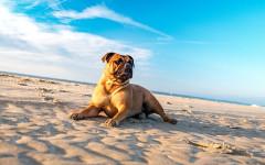 Spiagge per cani Lazio: mete estive per Fido