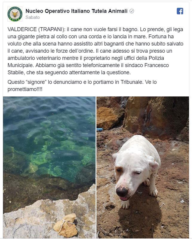Getta cane in mare con pietra al collo, follia nel Trapanese
