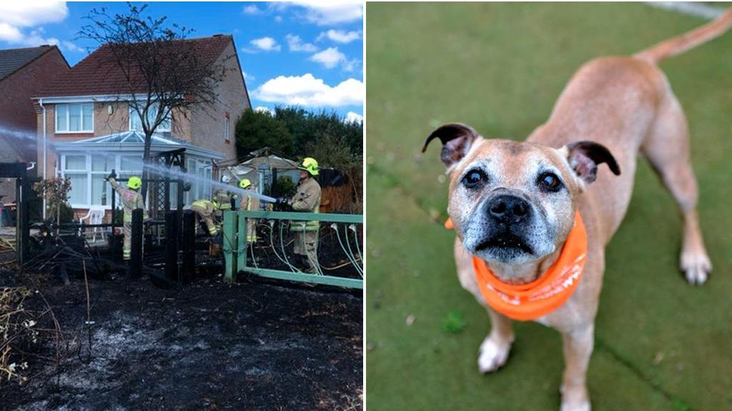 Cane salva vicini da incendio: Bailey è un eroe