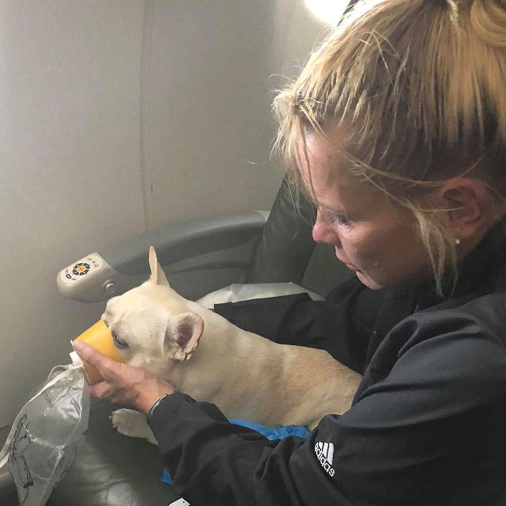 Cane salvato in aereo dagli assistenti di volo