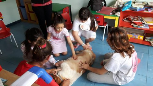 Cane accompagna bambini in sala operatoria, la storia di Serena