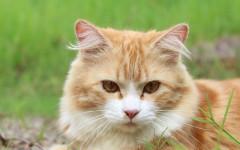 Parásito del gato: prevención y tratamiento
