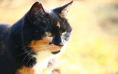 Cibo per gatti Monge, prodotti di alta qualità
