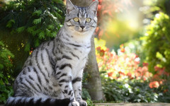 Ultima gatti: ingredienti di qualità per i felini