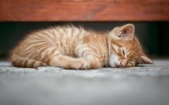 Fotos de gatos pequeños: la dulzura en una mirada