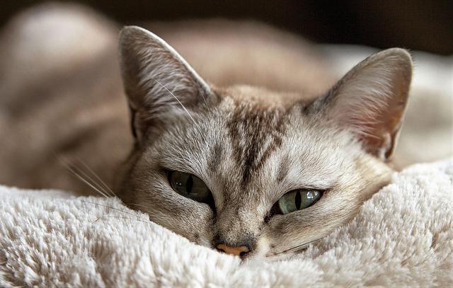 Emorragie gatto: cause e come trattarle