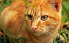 Hierba para gatos: estimulación para felinos
