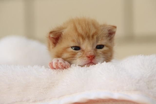 Avere un gatto se si ha un figlio: 5 buoni motivi per farlo