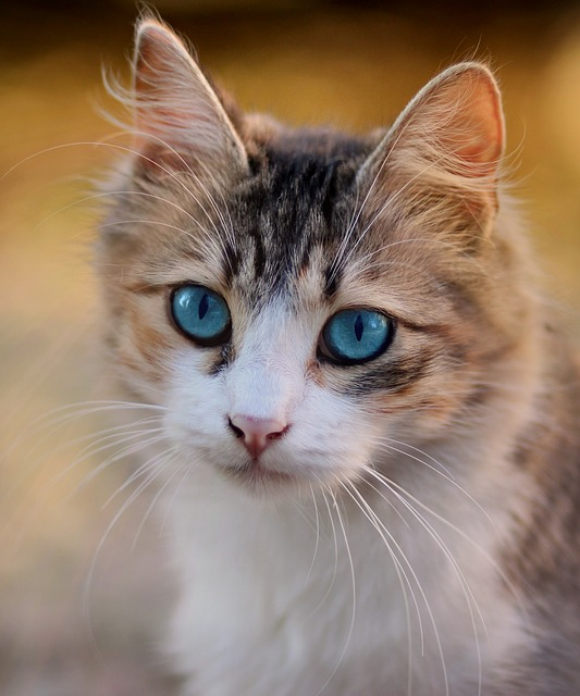Toxoplasmosis gato: síntomas de la enfermedad