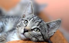 Sarcoma post iniezione nel gatto: complicanze della ferita chirurgica?