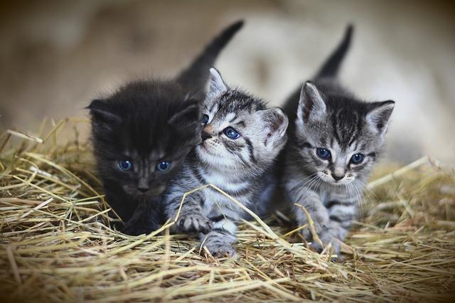 Proverbi sui gatti e modi di dire: quali sono i più famosi?