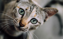 Constipation in cats: causes, symptoms and treatment