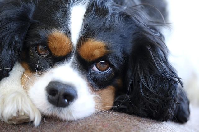 Reazioni cani sgridati: quali sono le più comuni?