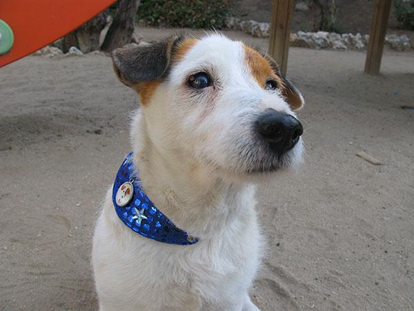Cook perro: un gran actor canino