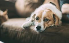 Emorragie cane: cause e come arrestarle
