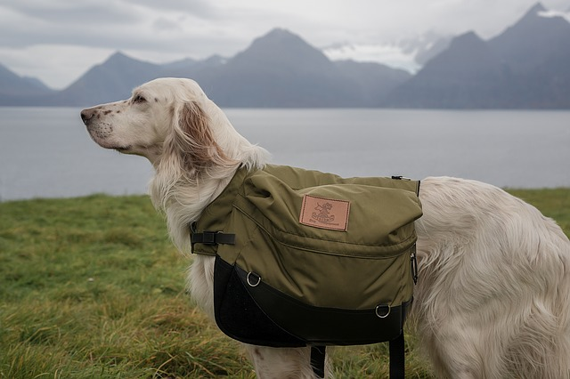 Dog backpack: get the best for your furry friend