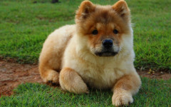 Fluffy dogs: do you like them? Check out these adorable ones