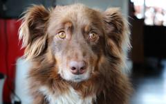 Cani colpevoli: quali sono le reazioni di Fido?